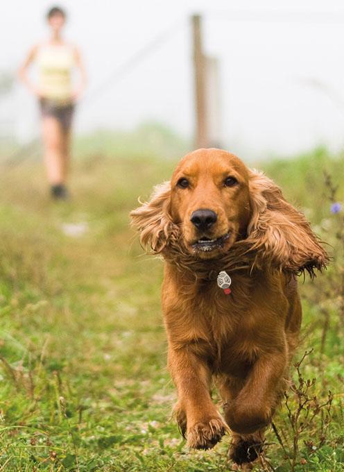 Ochrana proti klíšťatům a blechám pro psi a kočky