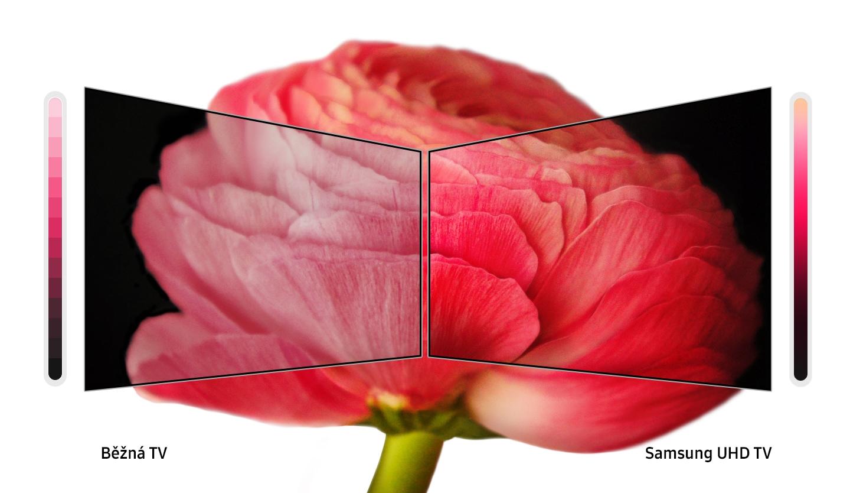 rozdíl zobrazení detailu květu na běžné tv a na Samsung TV s technologií PurColor