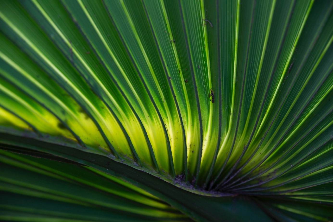odfotografovaný detail listu kvetu Objektívom TAMRON 35 - 150 mm F / 2.8 - 4 Di VC OSD pre Nikon