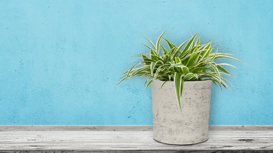 Kvetináč G21 Baltic Coil na polici pred modrou stenou