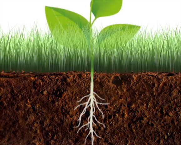 znázornená rastlina s koreňmi v zemi